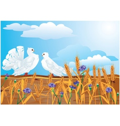 Couple white pigeons vector