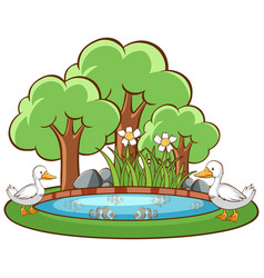 ducks in pond on white background vector image