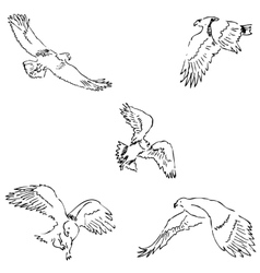 Eagles Sketch pencil Drawing by hand vector