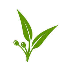 Eucalyptus green leaves icon on white background vector