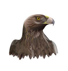 head portrait of golden eagle vector image
