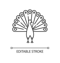 Peacock pixel perfect linear icon vector