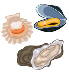 Seafood collection scallop mussel and oyster vector