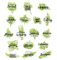 spices and herbs icons with lettering vector image
