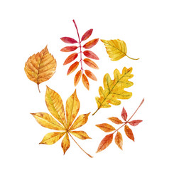 watercolor fall leaves set vector image vector image