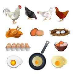 Chicken farm set vector