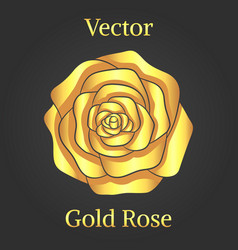 Gold rose flower vector