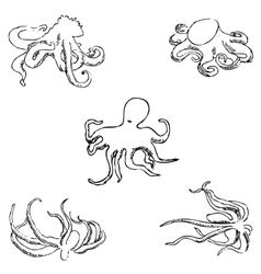 Octopus A sketch by hand Pencil drawing vector image