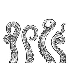 octopus tentacle set sketch vector image