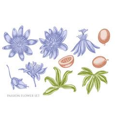 Set hand drawn pastel passion flower vector