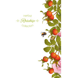 Rose hip vertical banner vector