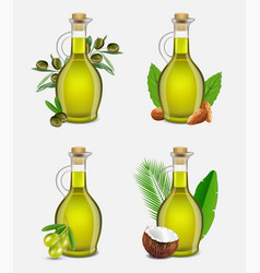 realistic argan olive coconut and almond vector image