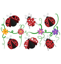 ladybirds pattern vector image vector image
