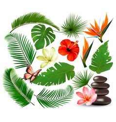 big collection tropical leaves and plant vector image