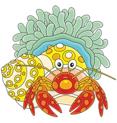 Diogenes-crab with an actinia vector