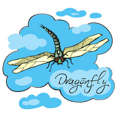 hand drawn ink dragonfly vector image