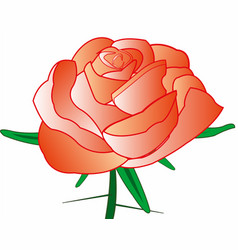 rose with thorn vector image