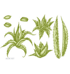 set hand drawn pastel aloe vector image