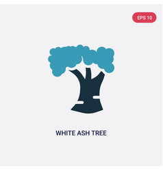 Two color white ash tree icon from nature concept vector