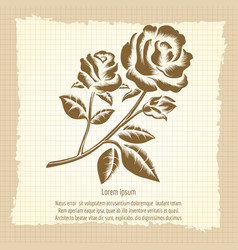 vintage poster with roses engraving vector image