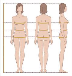 women body measurements vector image