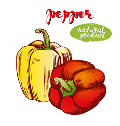 peppers bell vegetable set hand drawn vector image vector image