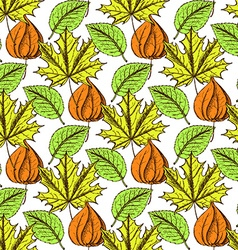 Sketch physalis and leaves vector image