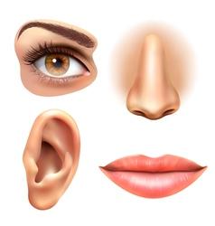 Eye Ear Lips Nose Icons Set vector image