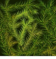 Fir branch background vector