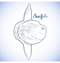 Graphic sunfish vector