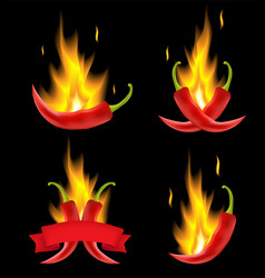 red hot chili pepper in fire vector image