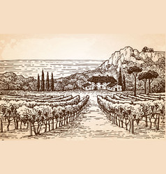 Vineyard landscape on old paper vector