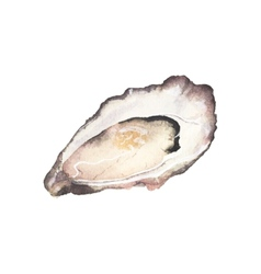 Watercolor oyster on the white background vector image