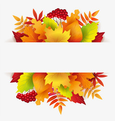Banner with autumn leaves berries and white backg vector