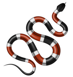 Coral snake vector