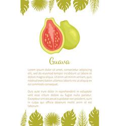 guava pineapple guavas exotic juicy fruit vector image