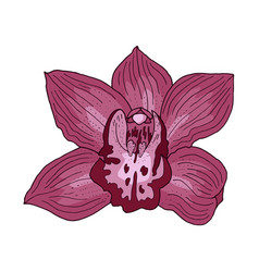 pink orchid hand drawn vector image
