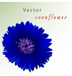 Template card with cornflower vector