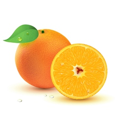 juicy oranges vector image vector image