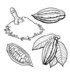 Cacao fruit beans and powder set of style vector