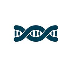 Model human dna double helix genetic vector