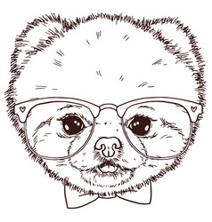 Pomeranian dog head with bow-tie and glasses vector