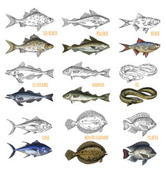 set of isolated sea or ocean fish side view vector image