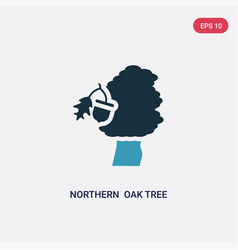 Two color northern oak tree icon from nature vector