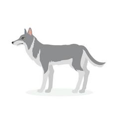 wolf cartoon in flat design vector image