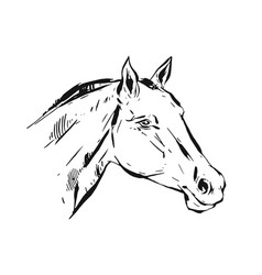 hand drawn lined ink graphic horse head vector image