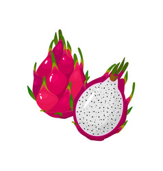Cartoon fresh red dragon fruit isolated on white vector