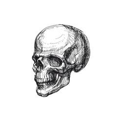 hand drawn human skull hand drawn sketch vector image