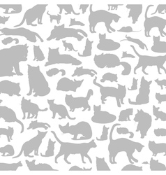 Cat a background vector image