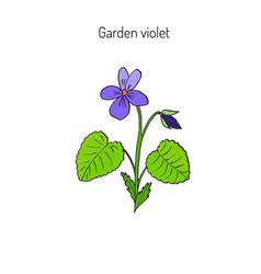 Wood violet flower vector